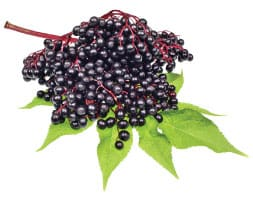 elderberry-benefits-nextgen-pharmacy