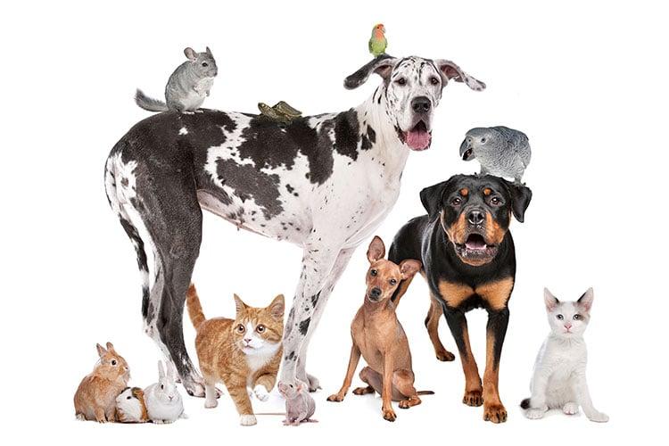 pet-medications-dog-cat-flea-treatment-heartworm-medicine-compounded-medication-for-pets-nextgen pharmacy tulsa broken arrow oklahoma