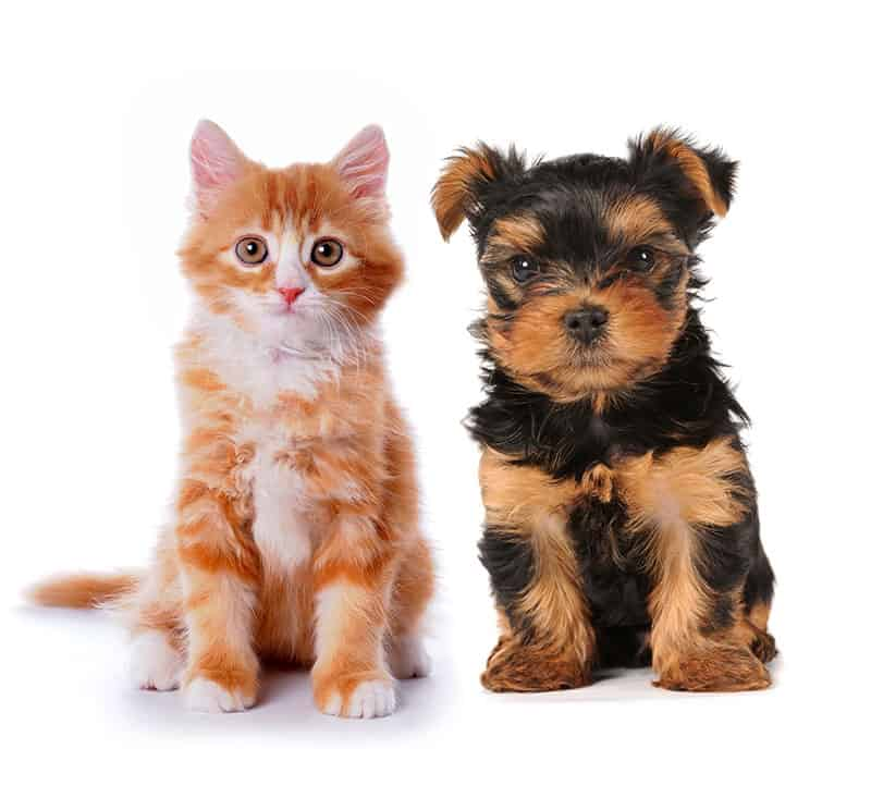 pet-medications-flea-tick-heartworm-prevention-cats-dogs-broken-arrow-oklahoma-nextgenrx-pharmacy